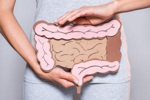 Sagoma di cartone dell'intestino (argomento IBS)