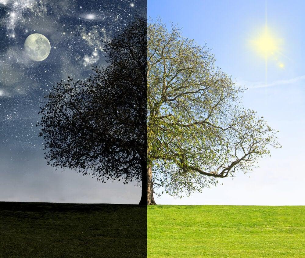 fasi giorno e notte cronobiologia